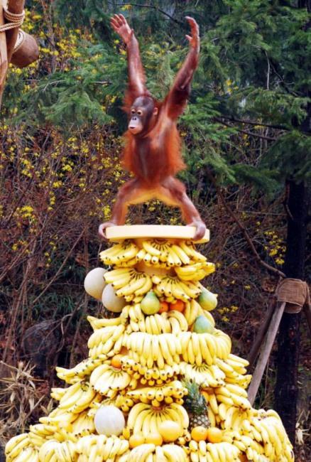 Фото прикол  про мавп та банан