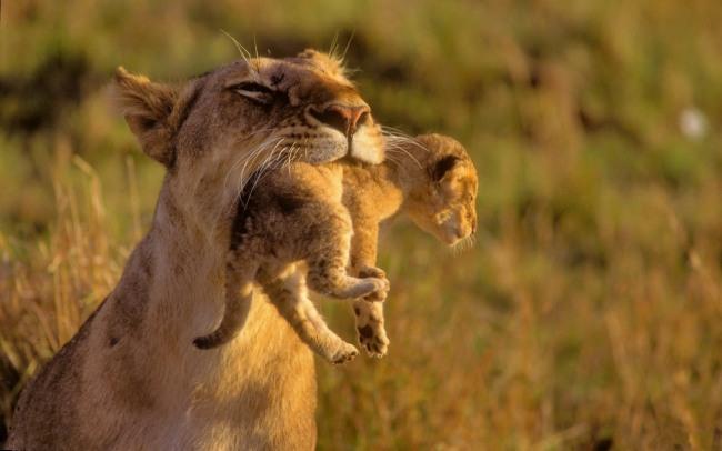 Фото прикол  про лева