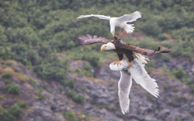 Фото прикол  про птахів та орла