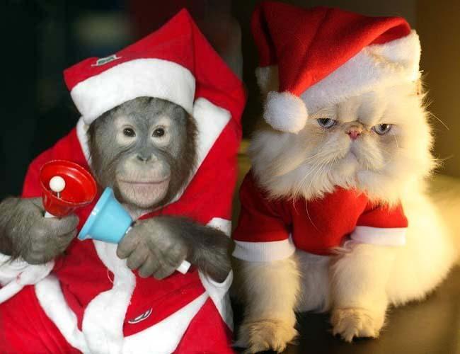 Фото прикол  про новий рік, котів та мавп