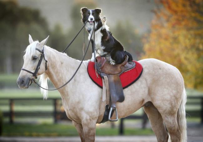 Фото прикол  про собак та коней