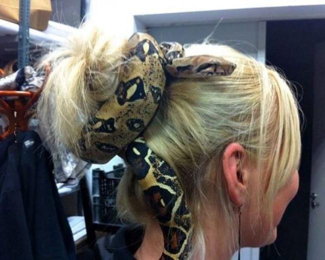 Фото прикол  про змій