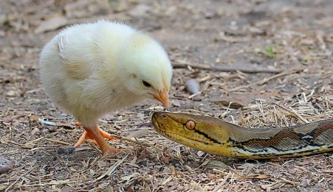 Фото прикол  про змій чорний