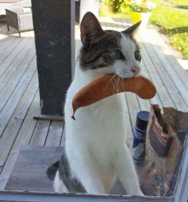 Фото прикол  про котів