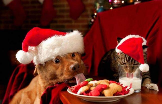 Фото прикол  про собак, котів та новий рік