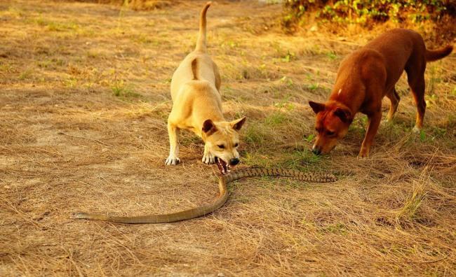 Фото прикол  про собак та змій