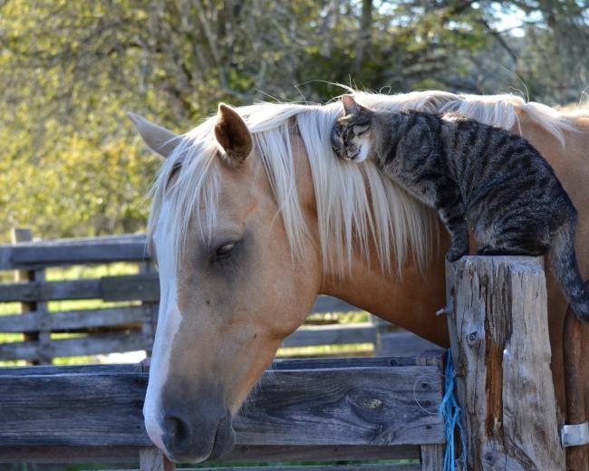 Фото прикол  про коней та котів