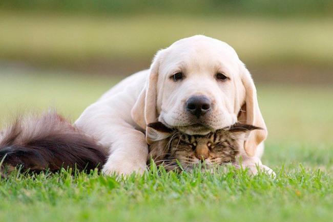 Фото прикол  про котів та собак