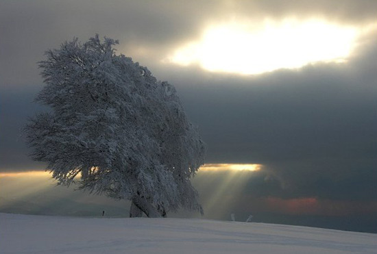 Фото прикол  про іній, холод та зиму