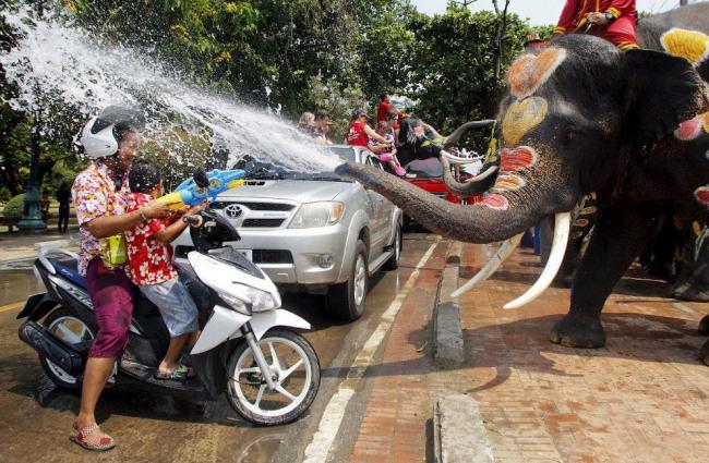 Фото прикол  про слонів