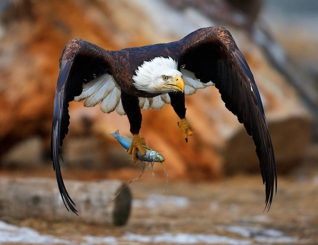 Фото прикол  про орла