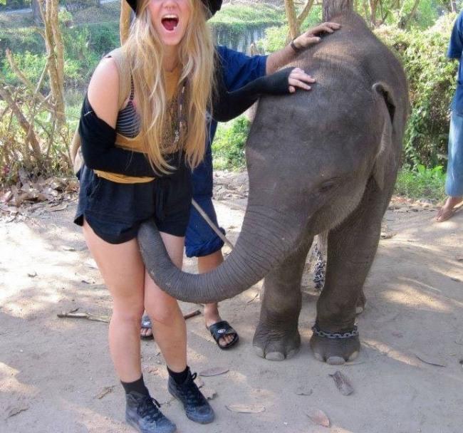 Фото прикол  про слонів вульгарний