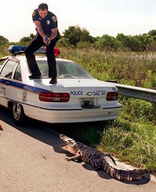 Фото прикол  про поліцію та крокодилів
