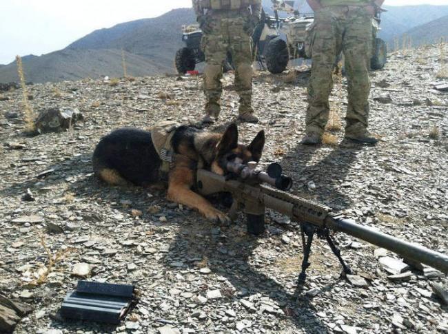 Фото прикол  про собак та зброю