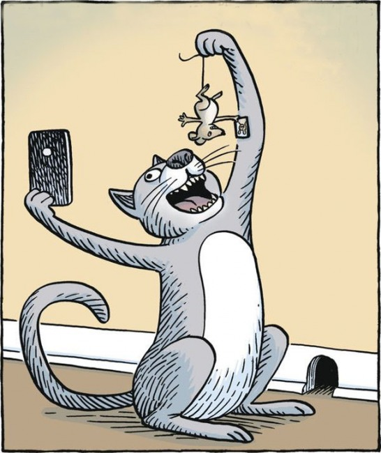 Малюнок  про котів, мишей та селфі