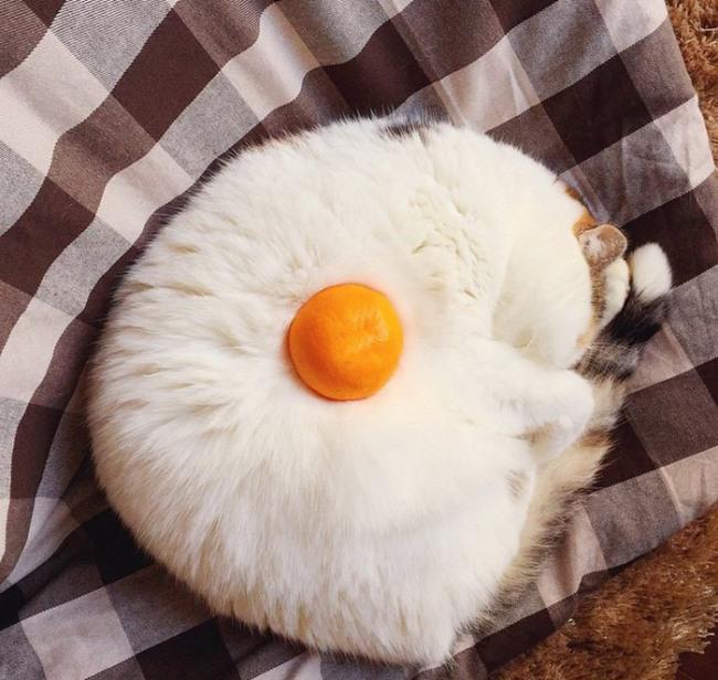 Фото прикол  про котів та апельсини