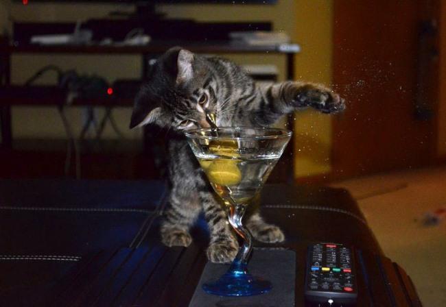 Фото прикол  про котів та алкоглоль