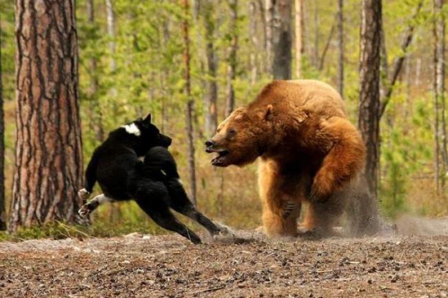 Фото прикол  про ведмедів та собак