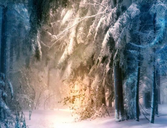 Фото прикол  про ліс та зиму
