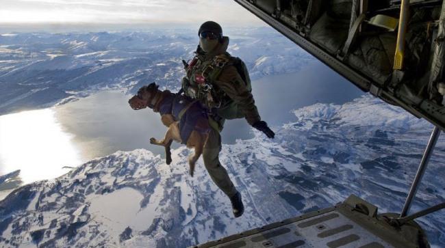 Фото прикол  про пдв та собак
