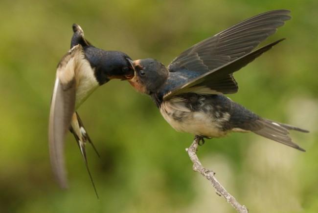 Фото прикол  про птахів