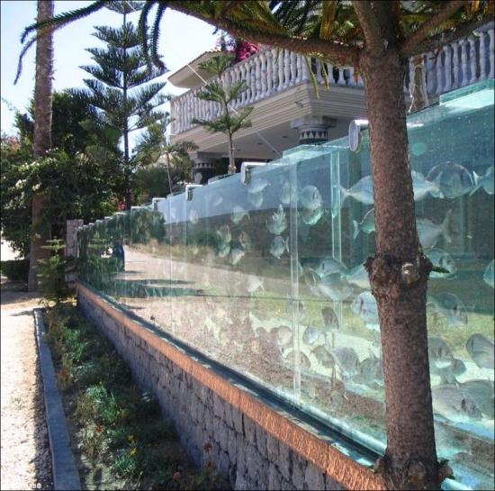 Фото прикол  про акваріум та рибу