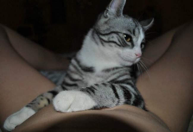 Фото прикол  про котів, дівчат, роздягнених людей вульгарний