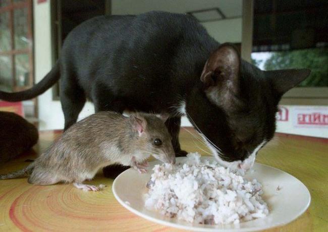 Фото прикол  про котів та мишей