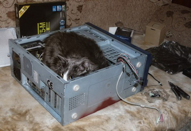 Фото прикол  про котів та комп'ютери