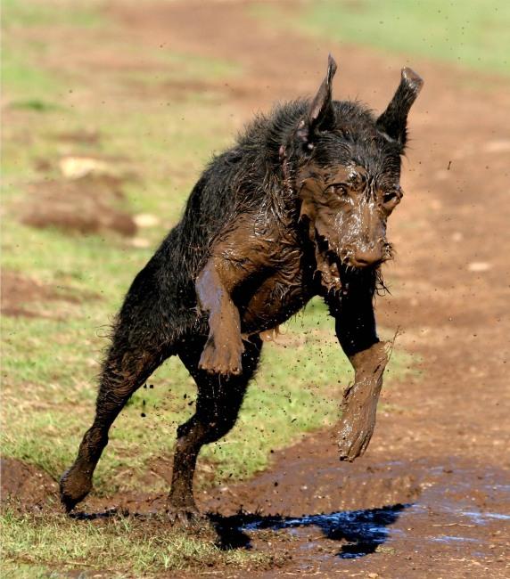 Фото прикол  про собак та бруд