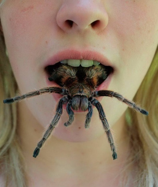 Фото прикол  про павуків