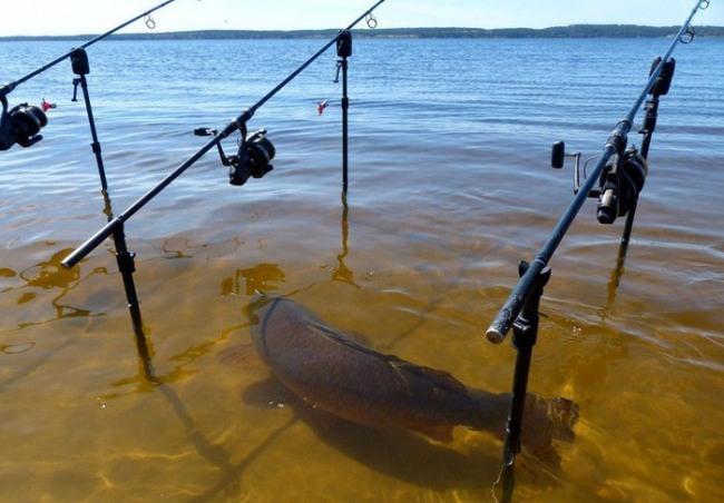 Фото прикол  про рибу та риболовлю