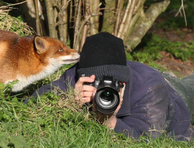 Фото прикол  про лисицю та фотографів