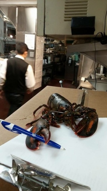 Фото прикол  про омарів та заповіт
