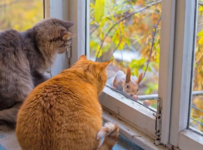 Фото прикол  про котів та білку