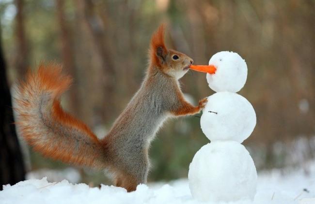 Фото прикол  про білку, сніговика та моркву