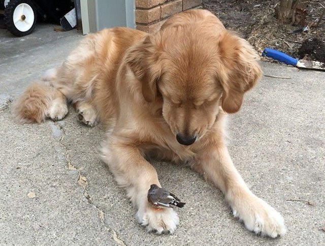 Фото прикол  про собак та птахів