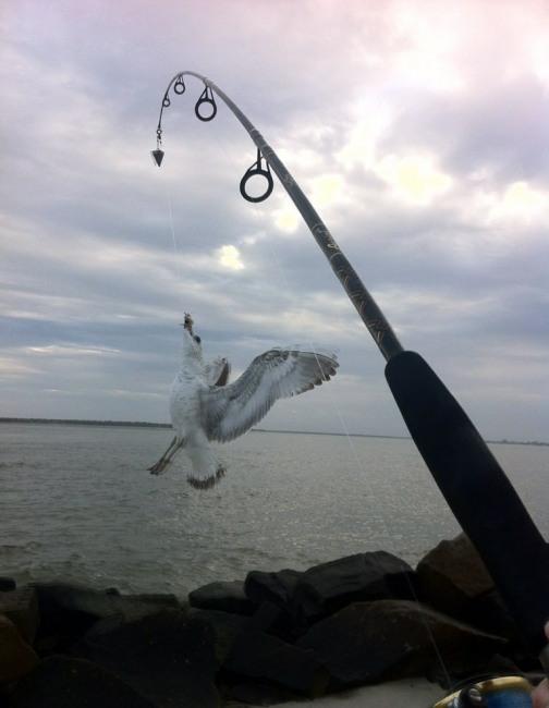 Фото прикол  про птахів та риболовлю