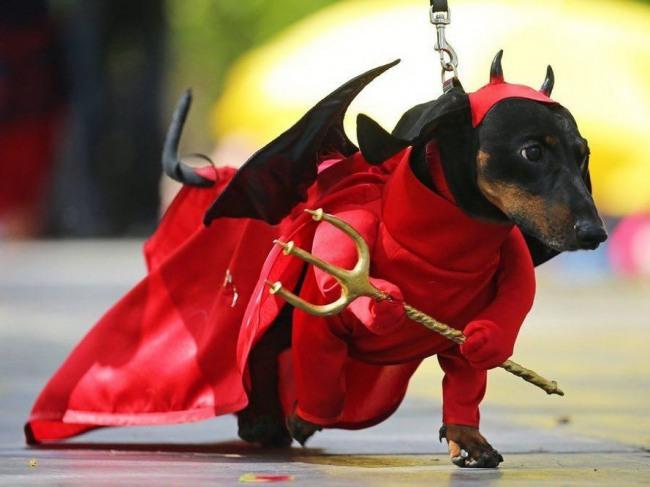 Фото прикол  про собак та диявола