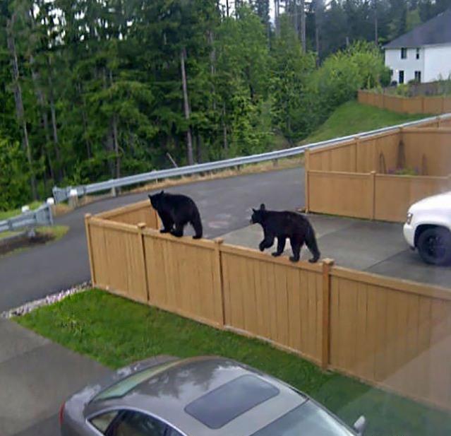 Фото прикол  про ведмедів