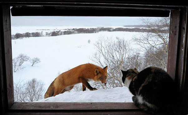 Фото прикол  про котів та лисицю