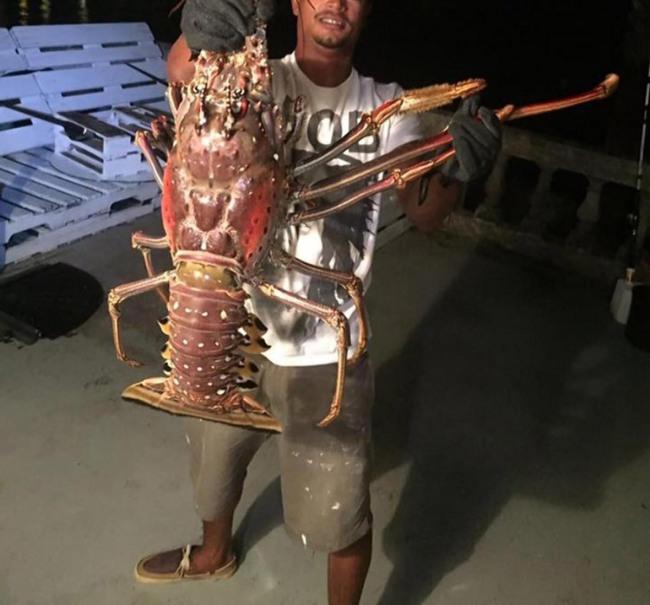 Фото прикол  про омарів