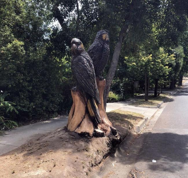 Фото прикол  про пам'ятник та папуг