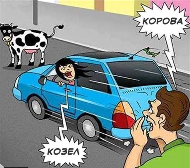 Малюнок  про жінок за кермом та корову