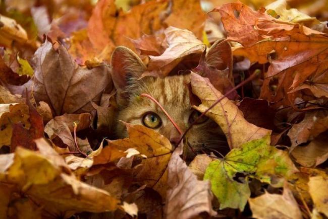 Фото прикол  про котів та листя