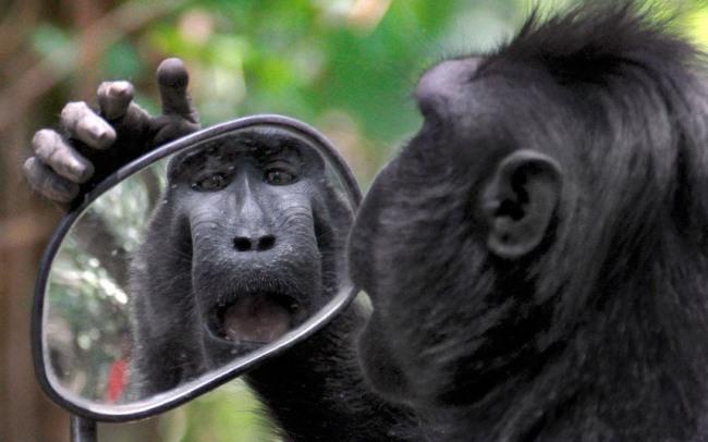 Фото прикол  про мавп та дзеркало