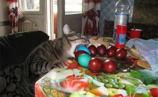 Фото прикол  про котів, яйця та великдень