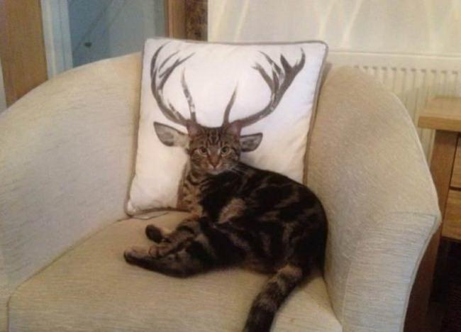 Фото прикол  про котів та роги
