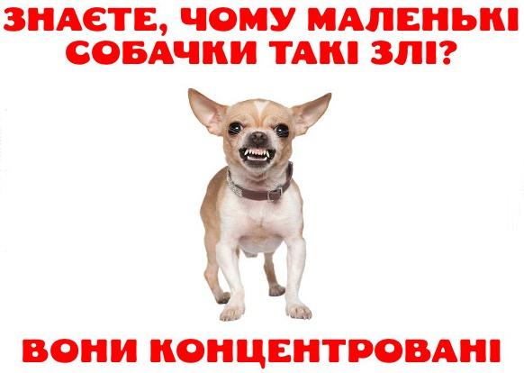 Фото прикол  про собак та злість