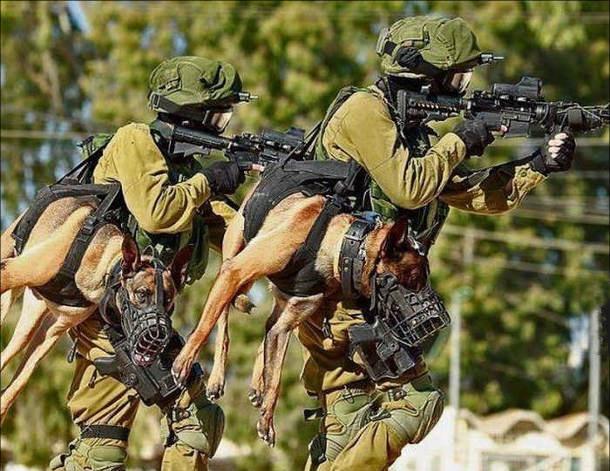 Фото прикол  про спецназ та собак